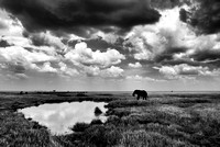 A lone elephant stands in the Serengeti next to a watering hole