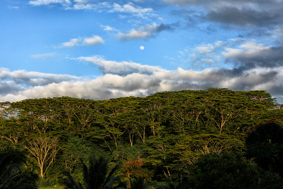 The full moon rises over trees in Kauai