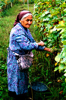 Old Woman in a Vineyard
